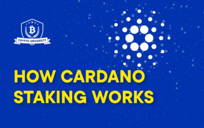HOW CARDANO STAKING WORKS